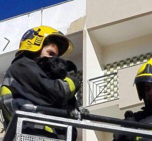 Bombeiros de Algueirão-Mem Martins resgataram cão de varanda